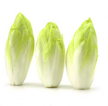 Salat Chicoree Grün Rot