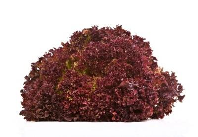 salat lollo rosso fruits friends. Black Bedroom Furniture Sets. Home Design Ideas