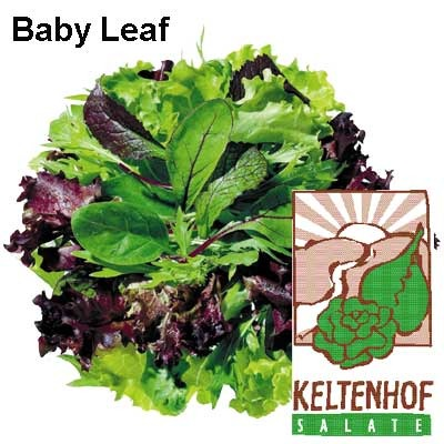 salat baby leaf mix k chenfertig 250g fruits friends. Black Bedroom Furniture Sets. Home Design Ideas